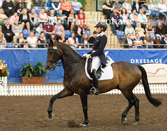 141025_2014_AUS_D_Champs_GPFS_5523.jpg (FranzVenhaus) Tags: horses performance sydney australia competition event nsw athletes aus equestrian riders dressage siec