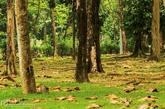 Autumn in Malaysia (mtux) Tags: trees pentax si m f56 tpm 135mm f35 k30 kodakkodachrome64 smcp justpentax smcpm135mmf35 pentaxsmcpm135mmf35 dxofilmpack4