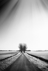 "World Heritage Site ""De Beemster Polder"" (shoot it!) Tags: world trees bw panorama 6 oktober sun white black holland tree heritage sunshine photoshop canon de landscape blackwhite site bomen scenery exposure skin zwartwit mark alien panoramic boom unesco ii netherland flare 5d polder zwart wit hollands landschap sunflare sloot noord zw the 2014 beemster landschappen bomenrij zonneschijn hollandse cs5"
