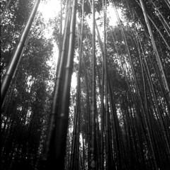 img447 (阿智) Tags: bw 120 film darkroom taiwan 黑白 新竹縣 司馬庫斯 kodak400tx 底片 尖石鄉 鎮西堡 暗房 沖片 rolleiflex35a
