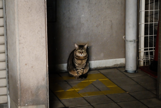 Today's Cat@2014-10-14