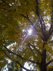 a_csu fall colors3