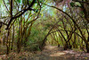 Walk with me... Long Beach El Dorado Nature Center (Sunset Beach Buzz) Tags: panasonic fz200 buzzfotoz trees longbeach nature park