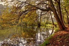 Herbst (Schneeglöckchen-Photographie) Tags: autumn lake see herbst