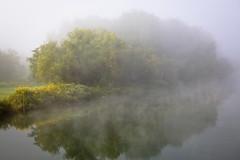 Tributary (TW Collins) Tags: mist newyork reflection yellow fog upstate wildflowers riverbank buskirk countyline washingtoncounty hoosicriver rensselaercounty