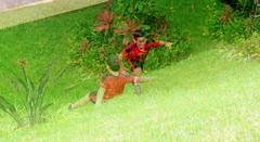 Tobogn de csped (DaFT95) Tags: boy people naturaleza cute green love up kids children fun juegos creative adorable down games adventure inventos peque abajo arriba tobogn divertido ternura imaginacin deslizarse cretivo cespd