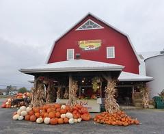 Pumpkins for Sale - Citrouilles a vendre (anng48) Tags: canada quebec pumpkins farms qc citrouilles fermes