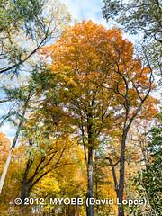 Duke Farms-203294 (myobb (David Lopes)) Tags: fall nature newjersey nj duke olympus leafs tress hillsborough e510 dukefarm