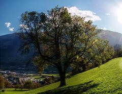 Turning (Elliott Bignell) Tags: autumn mountains alps tree schweiz switzerland suisse herbst ostschweiz berge rheintal baum sv rhinevalley sargans gonzen