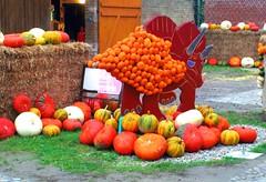 2014-10-20 Kremmen 05 (dks-spezial) Tags: scheunenviertel kremmen kurbisfest kurbismarkt