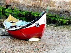 """Mini Skirt"" (mariaminhota) Tags: portugal boat barco fishingboat sjacinto barcosdepesca naturalpainting pinturanatural ilustrarportugal distritodeaveiro canonpowershotsx210is"