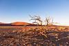 IMG_4438.jpg (The_Green_Ninja) Tags: africa tree azn namibia acacia exodus discover dune45 sossuvlei