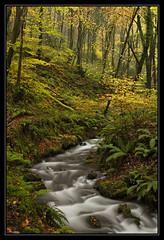 Porlock Paradise (RattyBoots) Tags: november autumn canon woods paradise 7d exmoor 2014 porlock polariser canon24105
