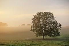 Oxygen (nathaliedunaigre) Tags: sunrise leverdesoleil brume mist misty brumeux paysage landscape campagne country arbres trees nature