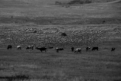 DSC_0350 (Kaigara Online) Tags: enisala cetate capul dolosman bw clouds water reflections trees fields romania tulcea jurilovca birds cows sheep cross cinema gods ruins arganum citadel medieval