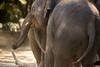 _MGL2713.jpg (shutterbugdancer) Tags: whitecheekedgibbon gorilla jackie rasha bowie fred africanlion westernlowlandgorilla zebra elephant asianelephant gracie bluebonnet elmo belle fortworthzoo gus winifred nubianibex booatthezoo