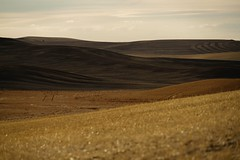 so many places to go, and things to see... (Alvin Harp) Tags: palousescenicbyway palouse washington farming rollinghills harvest golden september 2016 sonyilce7rm2 fe24240mm nature alvinharp