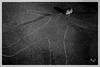 Self Portrait (Alejandro Ortiz III) Tags: 6d alejandroortiziii alex alexortiz allrightsreserved brooklyn canon canoneos copyright2016 copyright©2016alejandroortiziii digital ef24105mmf4lisusm eos halloween halloween2016 lightroom lightroom3 newjersey newyork newyorkcity rahway selfportrait shbnggrth alexortizphotogmailcom copyrightâ©2016alejandroortiziii â©2016 avant garde avantgarde