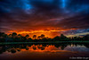 Florida Orange (DonMiller_ToGo) Tags: cloudsonfire cloudporn sunsetmadness sunsets nature reflection goldenhour lake florida hdr 5xp skypainter millerville skyscapes onawalk skycandy sky sunsetsniper hdrphotography d810 clouds outdoors