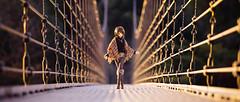 cool (のの♪) Tags: dd dollfiedream 吊り橋
