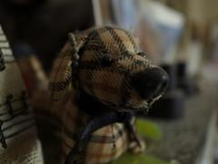 Stuffed dog (matsuyuki) Tags: stuffeddog stuffedtoy dog
