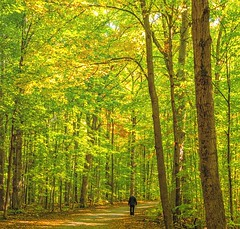 A walk in the woods (explored) (montrealmaggie) Tags: forest trees fall walking man