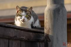 2016-10-16_15-41-38.jpg (der.dave) Tags: nachmittags katze niedersterreich herbst oktober 2016 sterreich bewlkt peisching nachmittag niedersterreich wolkig bewlkt sterreich