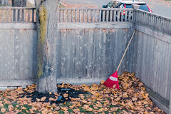 A break for the rake (Fred Ortlip) Tags: leaves fallcolor fallfoliage portsmouthnh portsmouthnewhampshire rakes