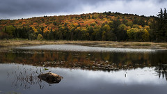 Algonquin's show time (andrewpmorse) Tags: algonquin algonquinprovincialpark park provincialpark ontario canada canon 6d fall lake trees orange red water marsh rock autumn leefilters lee06ndgradhard landscape