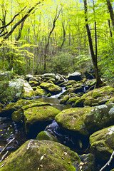 Peaceful Forest Stream (Omni-Photography) Tags: cascade peaceful forest trees mossy rocks river gatlinburg tennessee great smoky mountains national park