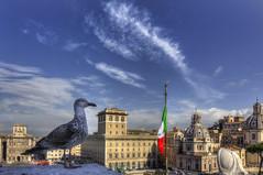 Roma n3  (On Explore) (Roberto Defilippi) Tags: 822016 rodeos nikond7100 roma gabbiano gull bandiera