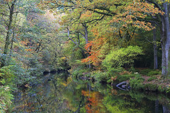Autumn in Fingle Wood (markgeorgephotography.co.uk) Tags: approved riverteign autumn wood woods woodland woodlands tree trees water river flow movement relection reflections nature rural environment ancient history historical dartmoor devon southwest southwestengland england unitedkingdom uk light colour color colours colors leaves fall canon canon5dmk3 canon5dmkiii canoneos5dmk3 canoneos5dmkiii canonef24105f4isusm leefilters manfrotto outdoor landscape landscapephotography landscapephotographer