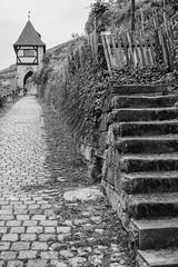 Weinwanderweg (muman71) Tags: fuji xt1 xf18 sw blackwhite esslingen weinberg 2016 dscf4854