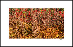 Autumn Vibrations (thor_thomsen) Tags: 241016 autumn colours nature earthy fineart sunny