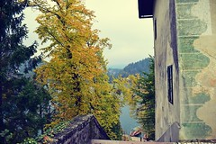 Blagoslov (anvelvet) Tags: blejski otok bled tree autumn yellow leaf lake church music jelena radan flickrtravelaward travel at autumnleaves
