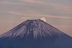 The Moon Rising from the Summit of Fuji (Yuga Kurita) Tags: fuji fujisan fujiyama mount mt japan landscape nature telephoto moon pearl dusk sunset nightfall