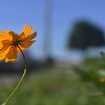 Flower at the SKY thumbnail
