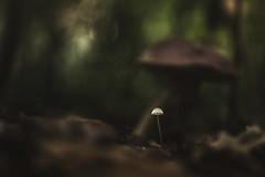 No need to run. (Joe Effendi (Always Late!)) Tags: effendi fujifilmxe1 fuji fujifilm nature outdoor color colour dof depthoffield flora fall autumn 2016 m42 vintagelens manuallens fungi mushroom takumar denhelder