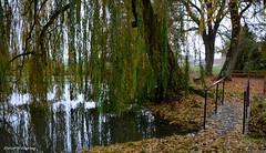 Trauerweide am Dorfweiher (diwe39) Tags: gramschatz see fischweiher trauerweide brücke herbst2016