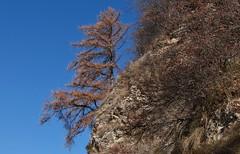 mlze (bulbocode909) Tags: arbres nature mlzes automne valais suisse bleu isrables
