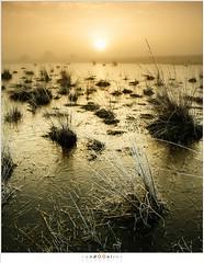 December sunrise (nandOOnline) Tags: mist morning strabrecht koud sunrise december nature nevel landscape vorst zonsopkomst dauw natuur strabrechtseheide cold fog ochtend landschap frost heeze nbrabant nederland
