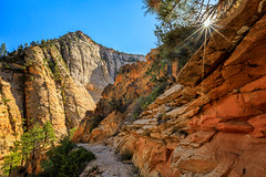 Onward (KPortin) Tags: zionnationalpark canyon rocks geology trees sunstar trail rimtrail