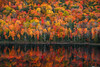 Fall Colors at Lake of the Clouds #2 (Matt Anderson Photography) Tags: michigan landscape usa porcupinemountainswilderness upperpeninsula aerialview autumn bush cliff cloudsky cloudscape colorimage cumuluscloud extremeterrain famousplace hiking horizontal lake leaf lushfoliage majestic midwestmulticolored naturallandmark nopeople outdoors photography reflection rollingsaturatedcolor tranquilscene vacations vibrantpanoramic tree forest beauty environment environmentalconservation highanglenature northamerica plant plantpart ruralscenics season theworld tourist tranquility wilderness woodland wyoming mountain grandteton tetonnationalaspenfishing jacksonhole river traveldestinations mountainrange oxbowbend reflectioncamping adventure canoeing day symmetry scene mattanderson porcupinemountainswildernessstatepark