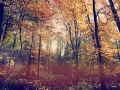 noch mehr Laub (nafoto!) Tags: tree autumn leicadlux4 forest