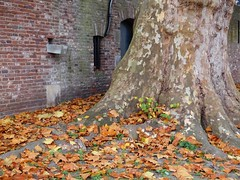 utrecht oudegracht (gerben more) Tags: autumn leaves plataan tree utrecht netherlands nederland