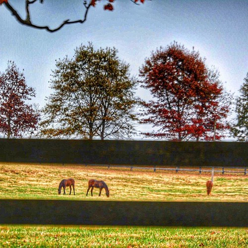 Autumn in the fields #horses ##horsefarmcountry #autumn2016🍁 #fallcolors🍁🍂 #sharethelex #kytourism