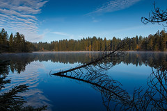 the old fir (benno.dierauer) Tags: etangdelagrure wasser water mirror refelections schweiz switzerland 70d jura