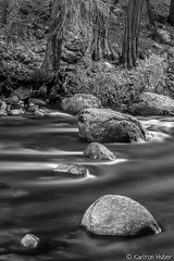 Yosemite Valley -The Merced River - 1665_B&W (www.karltonhuberphotography.com) Tags: 2016 bw blackandwhite california clearwater exploration flowingwater forest hillside karltonhuber landscape leadinglines longexposure mercedriver monochrome naturalworld nature peaceful river riverbank rocks rugged silkywater slope therapeutic tranquil trees verticalimage wandering water wildplaces yosemite yosemitenationalpark yosemitevalley yosemiteconnect