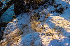 (Jelena1) Tags: stockholm stokholm estocolmo winter vinter zima invierno hiver snow sneg sn schnee nieve neige grass gras grs trava nature naturaleza natur priroda tree drvo arbre rbol baum trd sweden sverige svedska schweden suecia sude canon canon600d canoneos600d canonefs1855mmf3556is vinterviken