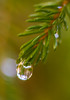Water For A Green World (John Kocijanski) Tags: odc favoritecolor water droplet spruce green tree needles macro bokeh canon60mmusmmacrolens nature reflections hbw